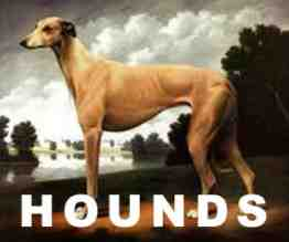 news-29-hounds